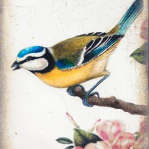 Sid Dickens T367 Songbird