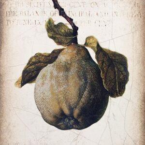 Sid Dickens T430 Ancient Pear 't Maaseiker Woonhuys
