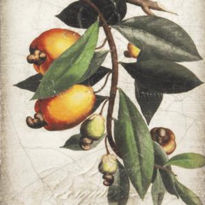 Sid Dickens T446 Cashew Apple 't Maaseiker Woonhuys