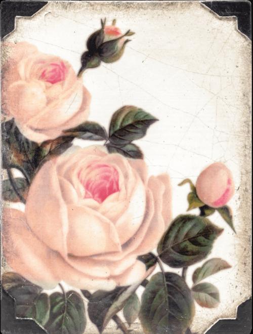 Sid Dickens T463 Gentle Rose 't Maaseiker Woonhuys