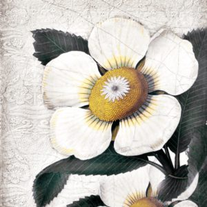 Sid Dickens T487 White Blossoms 't Maaseiker Woonhuys